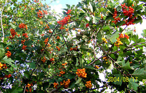我的故乡--------秋天丰硕的果实