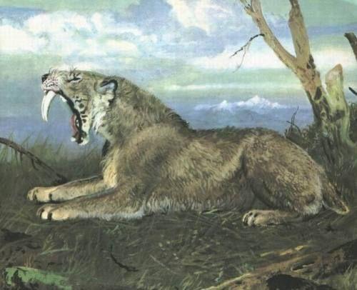 实际上,这些特征更接近现存猫科动物中最善于快跑的猎豹,说明似剑齿虎