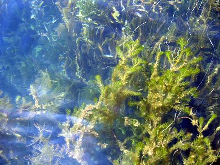 壁纸 海底 海底世界 海洋馆 水族馆 桌面 454_341