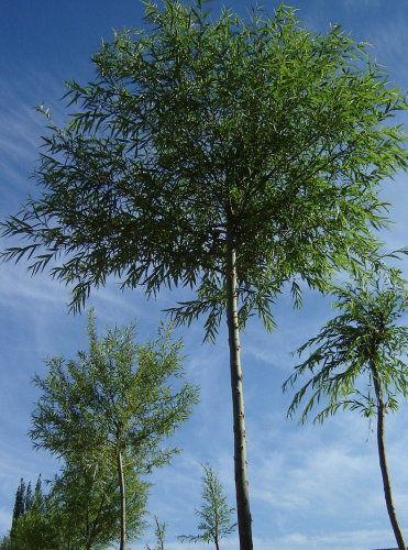 杏树,核桃树,杨槐树和漆树很多,杂草毛毛糙糙,就连树根儿,也盘着一大