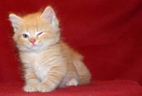 可爱的小动物--我喜欢