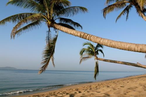 海南三亚的树-----椰子树