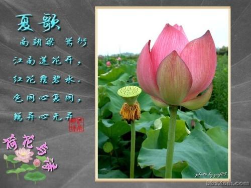信息中心 关于莲花,荷花的古诗   关于荷花的古诗小池杨万里泉眼无声