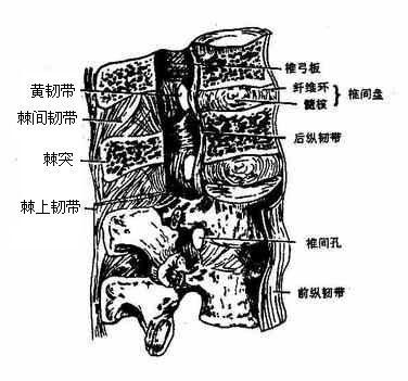 正常盆腔结构图