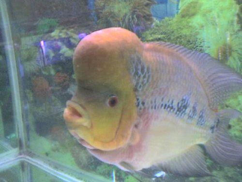 罗汉鱼的饲养 - 狗是最忠诚的智慧动物!