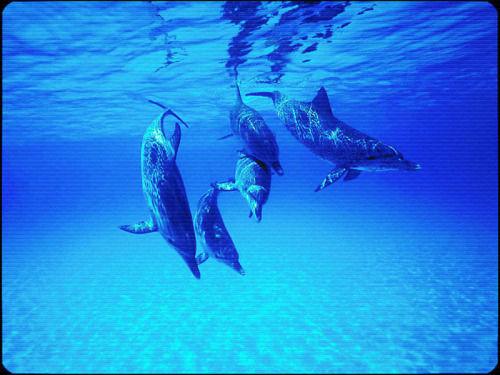 飞翔海豚简笔画步骤