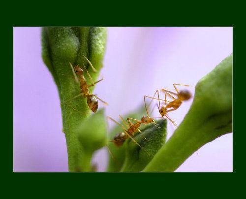 工作象蚂蚁,心情象蝴蝶-随心谁谈-我的搜狐