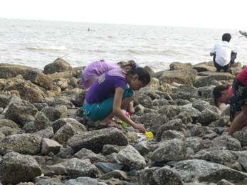 很多人在海堤下面赶海挖海蛎,于是带着他们俩也冲了下去,由于没带工具