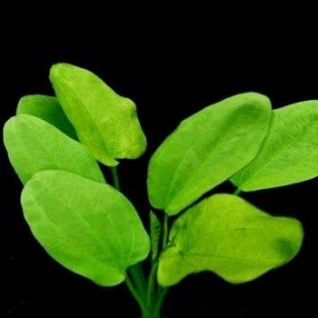 背景 壁纸 绿色 绿叶 树叶 植物 桌面 350_350