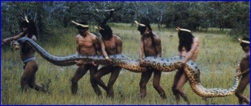 世界上最大的蛇(绿色水蚺)