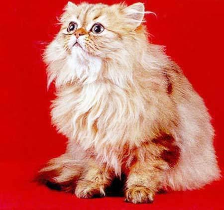 壁纸 动物 狗 狗狗 猫 猫咪 小猫 桌面 450_422